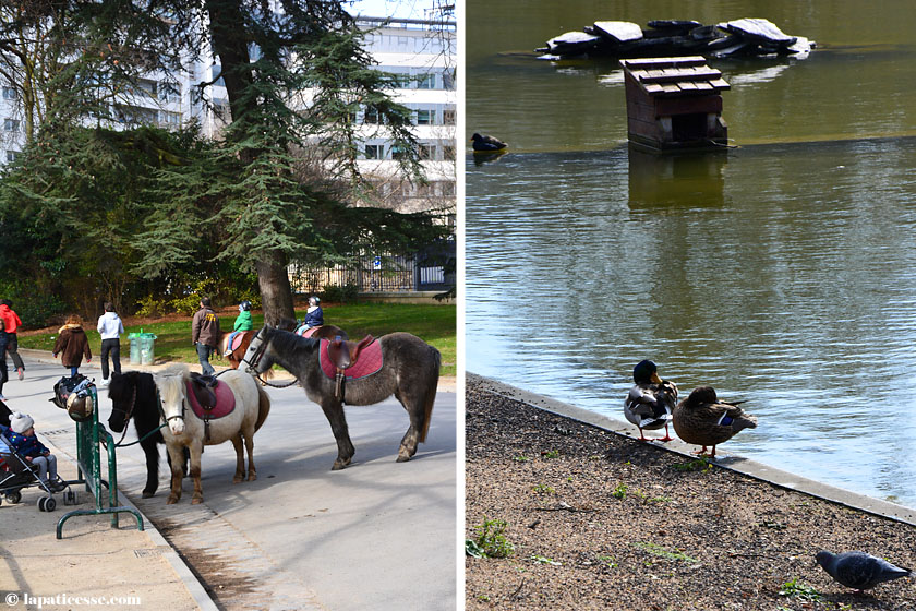 Paris Parc Montsouris Ponys Enten